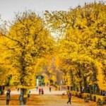 Sonbaharın en çok yakıştığı dünya kentleri