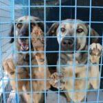 Köpeklerini bırakıp gittiler... Ceza gündemde