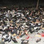 Samsun'da yol kenarına saçılmış yüzlerce ayakkabı bulundu