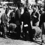 Osmanlı'yla ilgili ilk defa göreceğiniz kareler