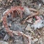 Yer: Isparta... Sadece kemikleri kaldı