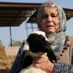 Ayşe teyzenin ekmek kapısıydı: 50 koyunundan 40'ını çaldılar