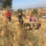 Gaziantep'te kurt sürüsü dehşet saçtı