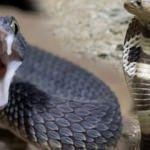 Rüyada yılan görmek kötü mü | Rüyada siyah yılan görmenin tabiri
