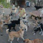 Emanet 100'ün üzerinde köpeğe bakıyorlar