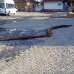 Kanalizasyondan çıkarıldı: Tam 10 metre!
