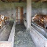 Trabzon'da korkutan olay! 120 hayvan telef oldu