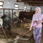 Devletten aldığı destekle çiftlik kurdu