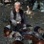 Tavuklarını bu halde bulunca gözyaşlarına boğuldu