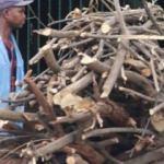Zimbabve'de elektriği kesilen halk, yakacak için ağaç kesiyor