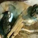 Yavru kedi ile köpeği görenler şaşıp kaldı