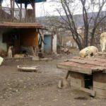 Kansere yenik düştü, 100 köpek sahipsiz kaldı