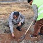 Aksaray'da 'ağaçlandırmada bizde varız' kararı!