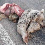 Sivas'ta korkunç görüntü! Parçalanmış halde bulundu