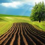 Tarım arazileri ve 2B taşınmazlarının satış başvuruları için son 5 gün