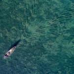 Türkiye'nin en büyük tatlı su gölünde korkutan görüntü