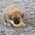 AK Partili başkan sokak köpekleri için yuva yaptırdı