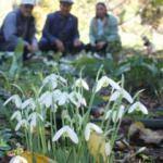 Kumluca'da Kardelen çiçeği şaşkınlığı