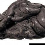 5 bin 700 yıl önce yaşamış kadının genetik şifresi çözüldü