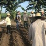 TİKA aracılığıyla yerli nohut Küba'da yetiştirilecek