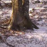 Bir yılda tek ağaçta geçen vahşi yaşam! Ayıya dikkat!