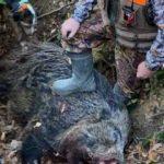 Bölgenin en büyük domuzunu vurdular!