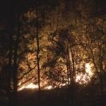 Rize'de yerleşim bölgesinde orman yangını!