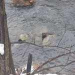 Burası Tunceli! Balık avlarken görüntülendi