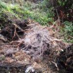 Beykoz'da toprak kaydı, ağaç devrildi