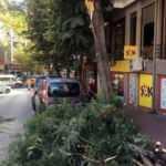 Devrilen ağaçtan belediyeden tazminat istemek mümkün