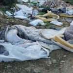 Bodrum ormanlarından bir günde 65 ton çöp çıktı!
