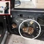 Sınır kapısında 5 bin su kaplumbağası ele geçirildi