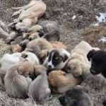 Yavru köpekler soğukta ölüme terk edildi