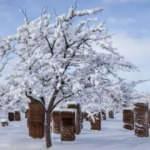 Bitlis'te kartpostallık kar manzarası