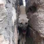 İki duvar arasına sıkışan köpeği, 1 saat sonra kurtardılar!