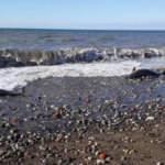 Zonguldak sahilinde korkutan görüntü