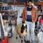 Satmak için götürdüğü koyunu öyle bir şey yaptı ki...
