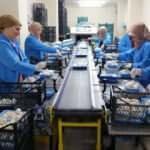 28 odada ayda 100 ton mantar üretiyorlar