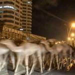 Görüntüler Libya'dan! Tam 3000 deve...
