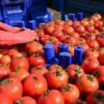 Rusya'dan domateste kotayı kaldırması talebi