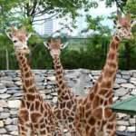 Bursa Hayvanat Bahçesi online ziyarete açıldı