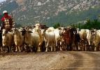 3 bin lira maaşla çoban bulamıyor