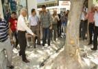 Burdur'daki ağaç kesme tartışması