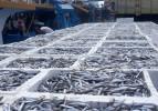 Trabzon'da bu sezon 17 bin ton balık avlandı