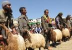 Kato Dağı'nda Koyun Kırpma Festivali