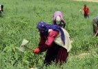 İşçilerin Ramazan'da sıcakla imtihanı