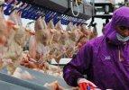 IKBY'ye tavuk ihracatı yeniden başlıyor
