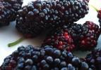 Sağlık iksiri meyve: Kara dut