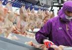 2014'te tüm Avrupa'ya tavuk yedireceğiz