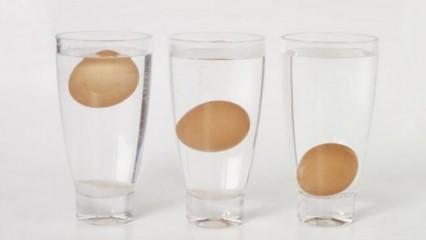 Bayat yumurta nasıl anlaşılır?